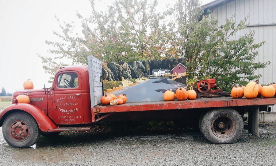 It's Pumpkin Picking Season