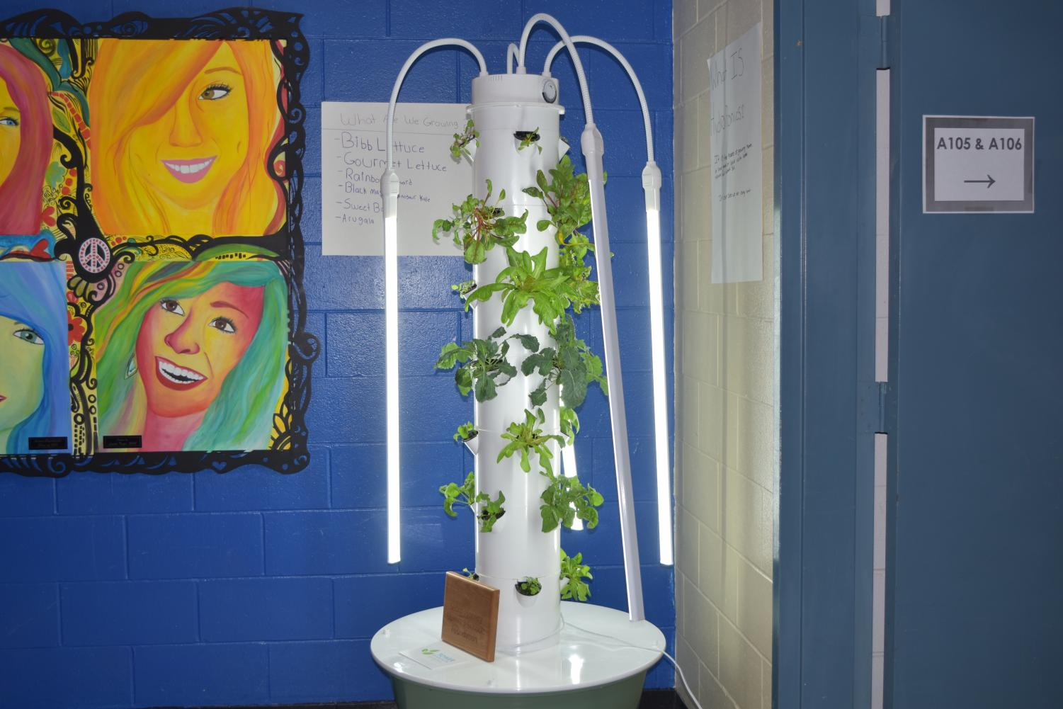 One of the plant stands illuminates the hallway by the office of SWHS.